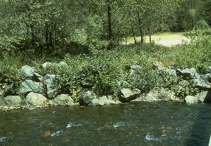 Rock may be used in conjunction with vegetation or other measures such as root wads, gabions, or jetties to provide bank protection (Photo 6.3).