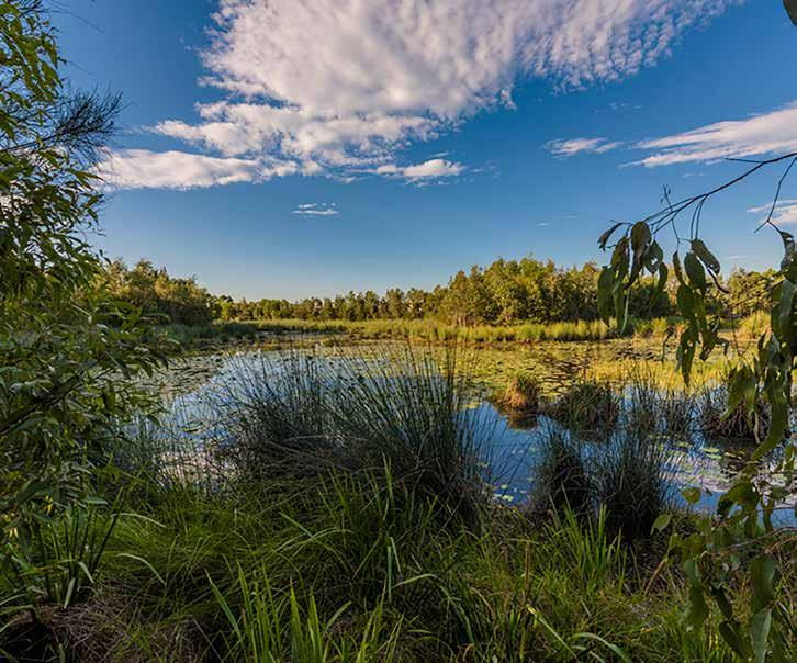 WETLAND A wetland of approximately two hectares is proposed to be integrated within the regional parks, providing for aesthetic amenity,