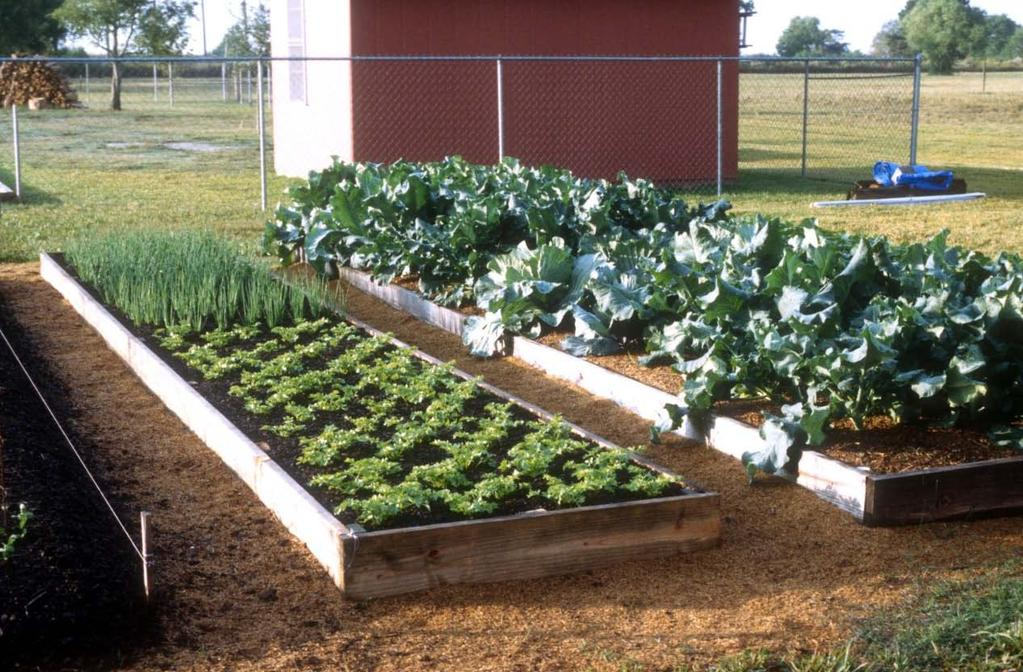 You can grow a lot of vegetables in a 10ft x 20ft or 20ft x 40ft