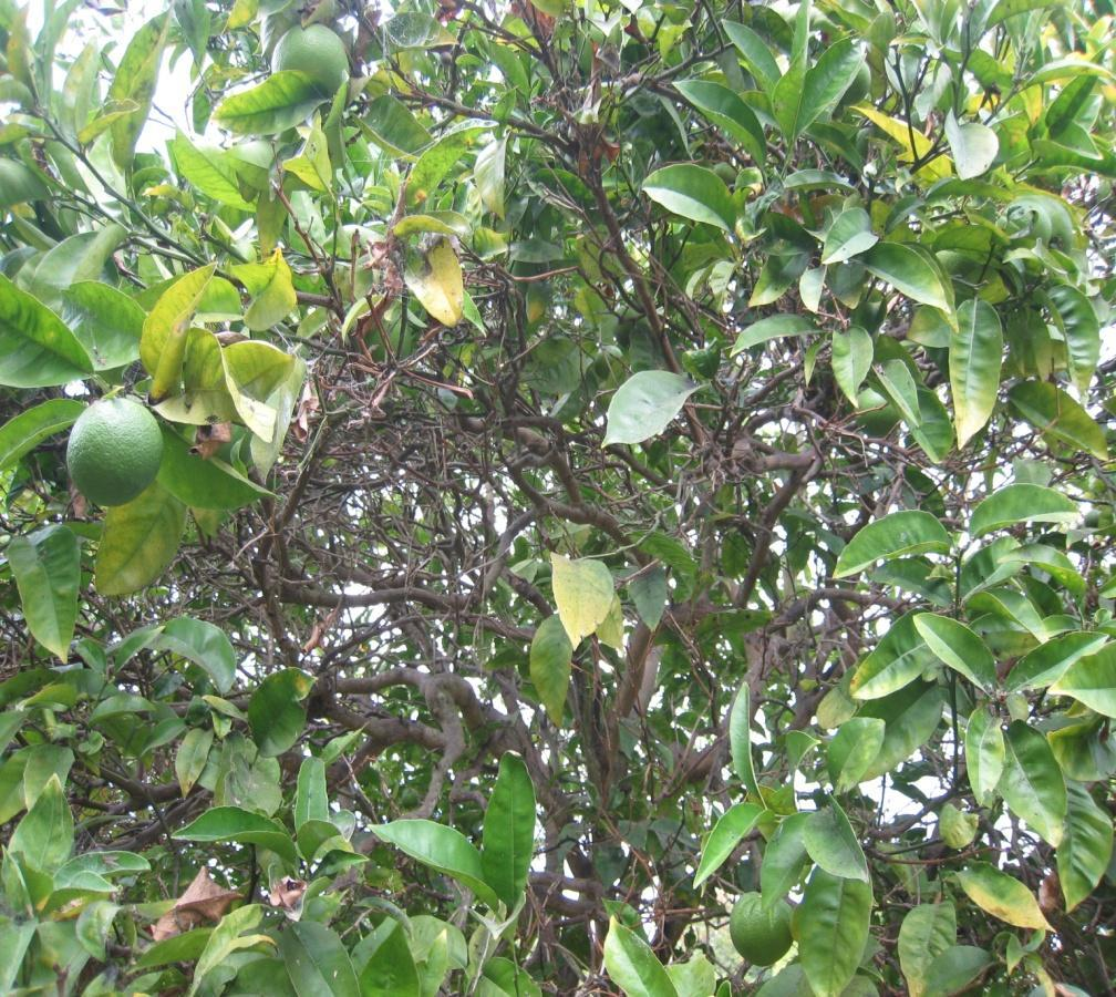 REASONS TO PRUNE: Reduce Pest Problems Improving air circulation and light penetration