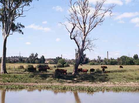 From Heidelberg City of Streams. (Photo Estate C.C. Bailey) Banyule Flats lay in a farmland setting until the 1960s, when the estate surrounding Banyule House was sub-divided for housing.