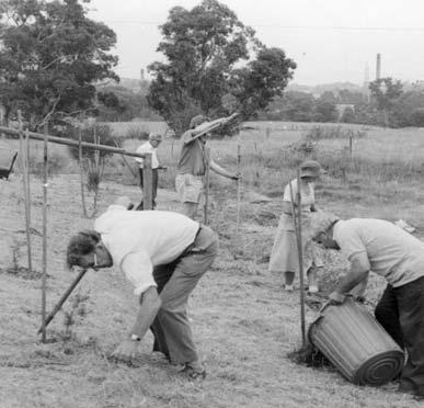 4 Warringal Conservation Society at Banyule Flats needed more water over a dry summer. WCS carried out a Maintenance Working Bee on 31 January 1981, with Council support, weeding and mulching.