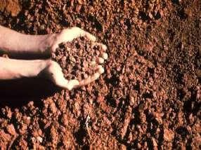 Importance of soil organic matter How different soil amendments affect the structure, texture, and ph of soils Soil organisms & effect on the chemical and physical properties of soil Colloids, CEC,