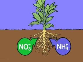in freshly added organic matter are not immediately available to plants Residues must be decomposed