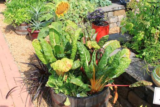 Containers for vegetable plants must be big enough to support the plants when fully grown, hold soil without spilling, have adequate drainage and never have held products toxic to plants or people.