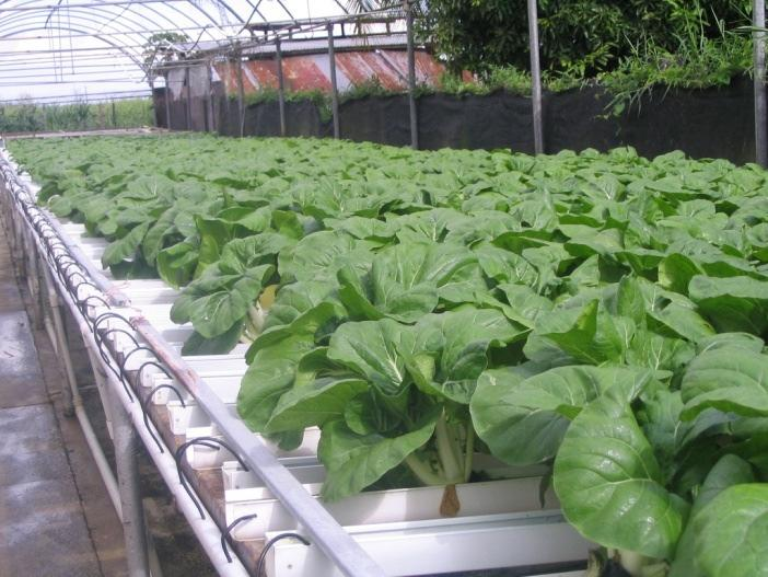 Closed Irrigation System NFT is an example of a hydroponic system with
