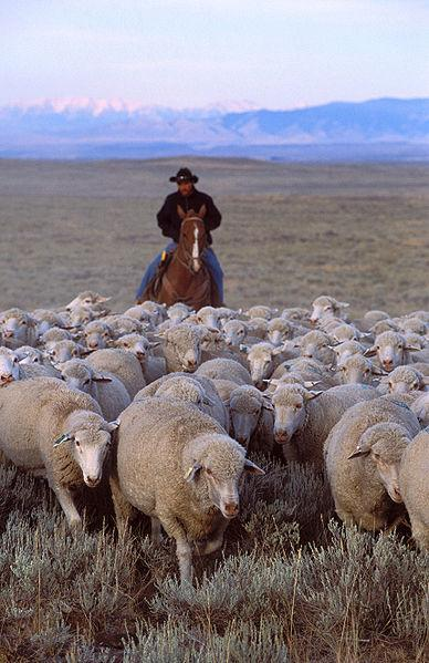 Overview of ThermWise ThermWise Energy Efficiency Alliance Herding Sheep More Control = Better