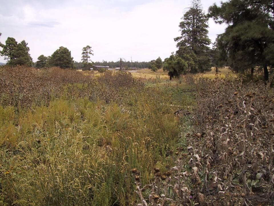Problem Severe noxious weed invasion