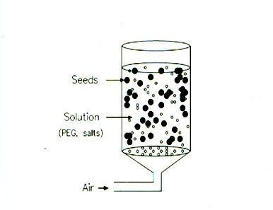 Seed Priming A process of prehydrating and redrying seeds to enhance their subsequent germination