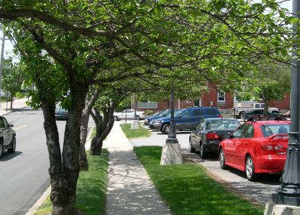 Street trees should be located outside of the sight triangle at intersections. 4. Street trees, at the time of planting, should be no less than two and one-half to three (2.