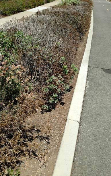 8: Shrubs 101 Renewal: When is the Best Time? An old or unhealthy plant increases risk in a landscape.