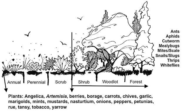 11: Natural Pest Control 169 Successional Diversity Successional trajectory is a theoretical model used to explain how landscapes recover from a disturbance, such as fire or flood.