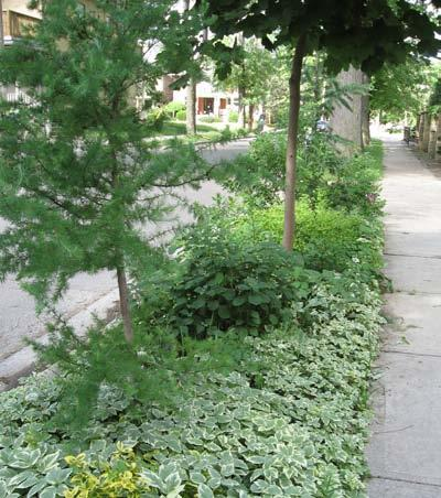 Use of landscaping to provide a buffer between the street and sidewalk Coordinate landscaping and planters which accommodate seating areas Trees and plant