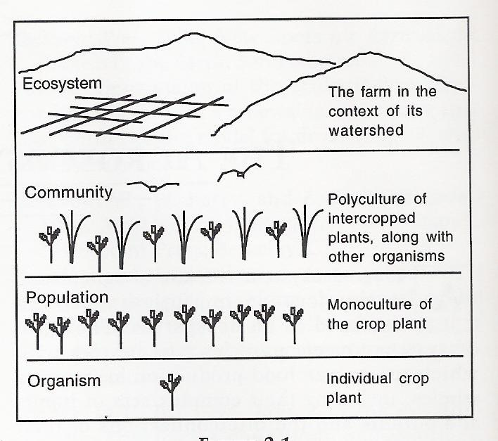 Garden As An Agroecosystem 1 13