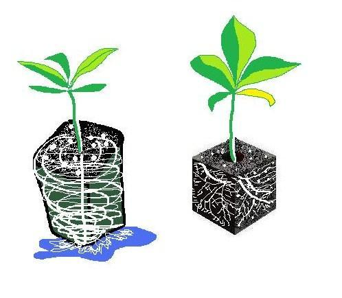 Transplants: Soil Blocks A new old idea that mimics garden soil Plastic pots reduce air flow and cause rootbound