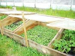 Cold Frame Simple, inexpensive homemade structures used to grow cool season crops Used to harden young seedlings started indoors in early spring Space and crop dependent Heat is provided by the sun s