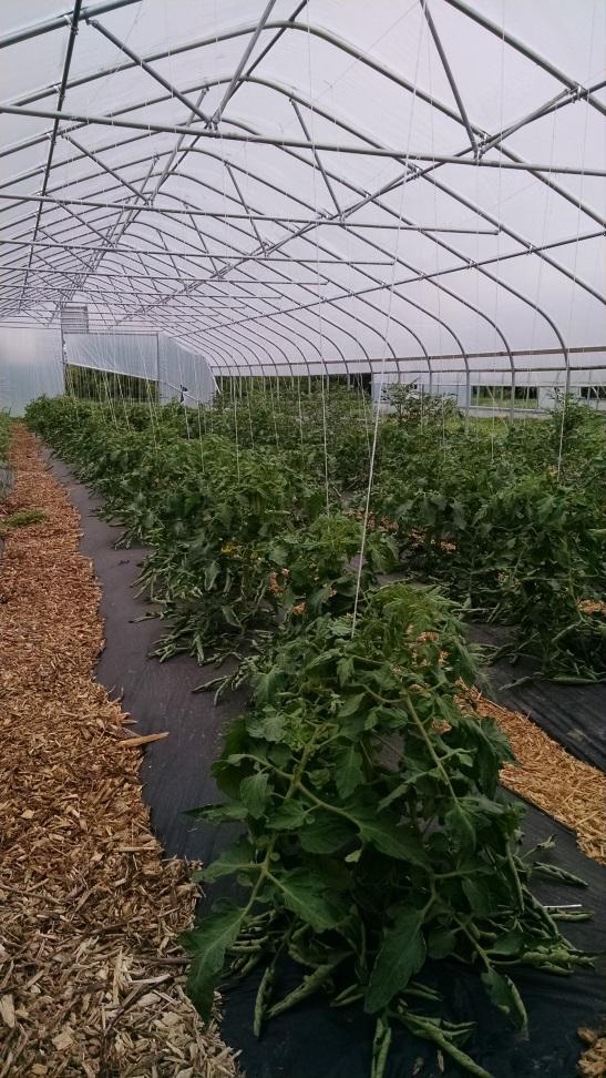 High Tunnel / Hoop House Disadvantages Increased management required Especially for pollination