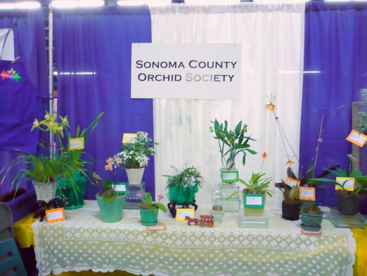 TAKE A LOOK AT OUR NEW WEBSITE www.sonomaorchids.com The site will continue to grow, with a photo gallery, articles and other items useful to orchid growers.