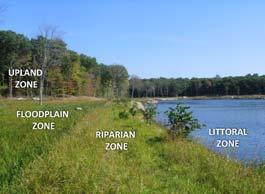 What are Vegetated Buffers ECOTONE The shoreline of a lake is the single most important aspect of lake ecology.