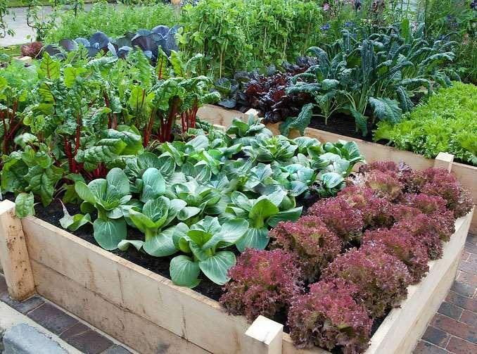 Helping You Grow: Landscapes that feed your family and