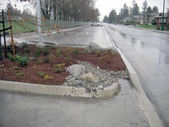 Rain gardens collect and