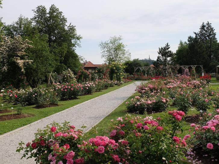 An important part of the scenery of the Upper Rose Garden is the»borrowed landscape«: the picturesque church on the top of Homec Hill in the south and the Kamnik Alps with the peaks of 2.500 m a.s.l. in the north.