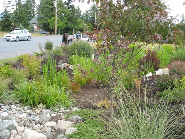 Right: A rain garden in Anacortes planted exclusively with Ecology/WSU recommended plants. Photos by Everett Chu / WSU Skagit County Extension Master Gardeners.