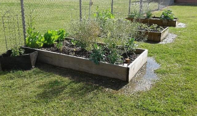 SORRENTO PRIMARY S GREAUXING GARDENS It has been my pleasure to help Sorrento Primary Get It Greauxing!