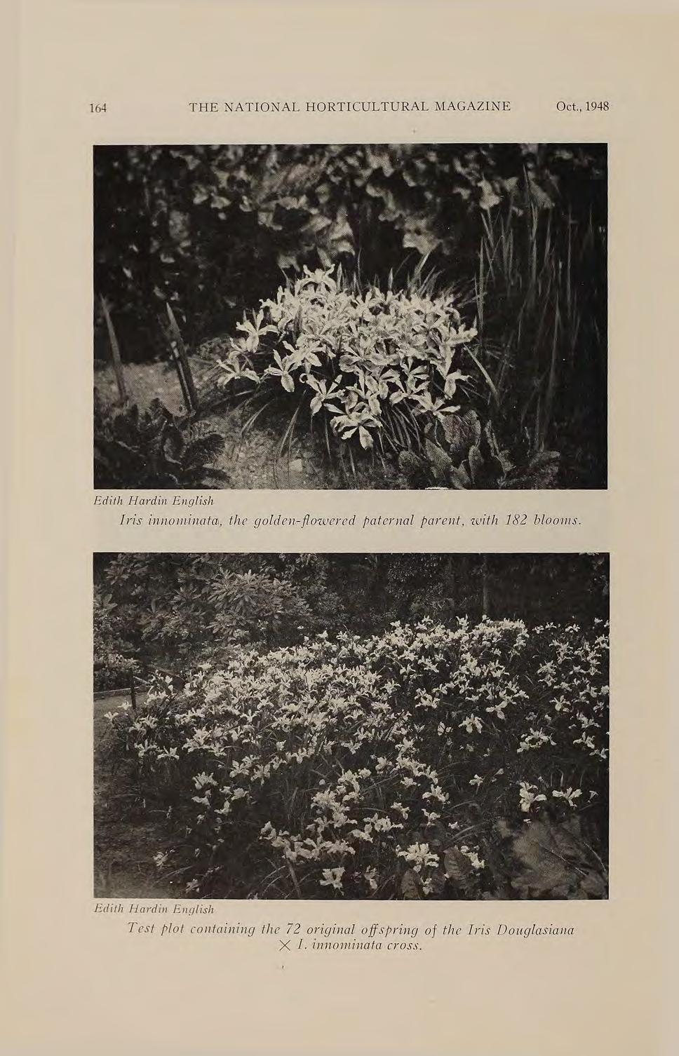 164 THE NATIONAL HORTICULTURAL MAGAZINE Oct., 1948 Edith Hcwdil1 Engl1:sh Iris innolw.ina.ta, the golde17 -f!