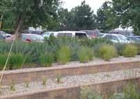 Parking lots shall be buffered from view from public right of way with practical landscaping.
