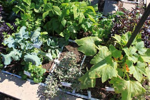 Figure 4.13. Fall garden scene. Extending the Growing Season While the traditional garden is limited to spring through fall, ways have been found to extend the season.