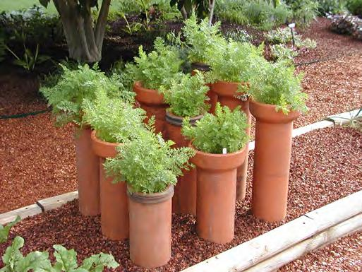 Figure 4.5. Vegetables in containers on a patio space. tomatoes or a colorful herb mix (Figure 4.5). Planter boxes with trellised pea vines can create a cool, shady place on an apartment balcony.