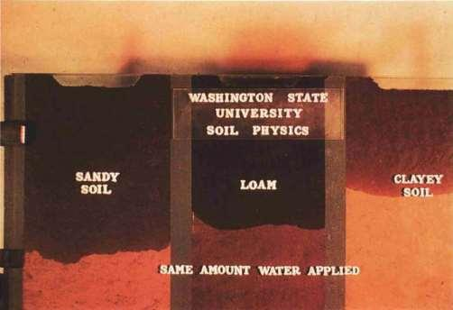 Soil Texture & Water Storage Equal volume of water & soil Sandy soils have less pore space than silt or clay soils Water penetrates more rapidly and deeper in sandy soils than silt or clay soils
